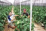 invernadero Jose Guttierez