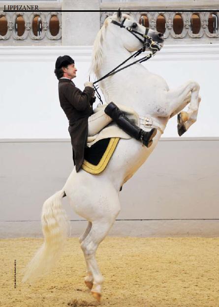 escuela_española_equitacion_vienna_Grander